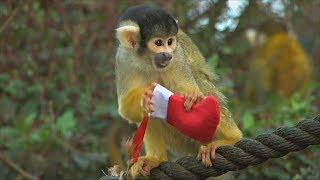 Животные празднуют Рождество в Лондонском зоопарке (новости)