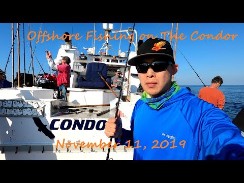 Condor Sportfishing - Offshore Yellowfin, Skipjack, And Yellowtail / Veterans Day 2019
