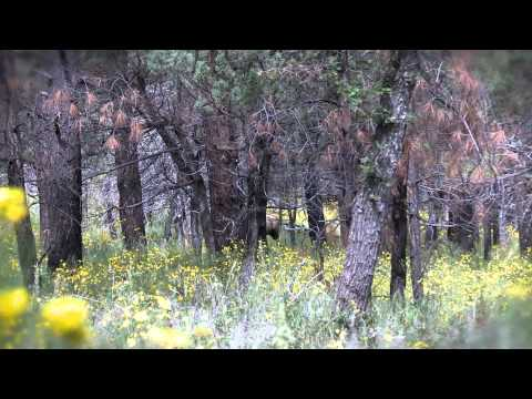 Gila elk trailer Travel Video