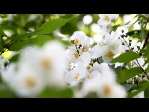 [10 Hours] Spring Flowers #1 - Video & Soundscape [1080HD] SlowTV