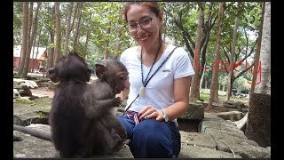 Wow! Surprise to see cute girl playing with small baby monkey | They are very lovely!