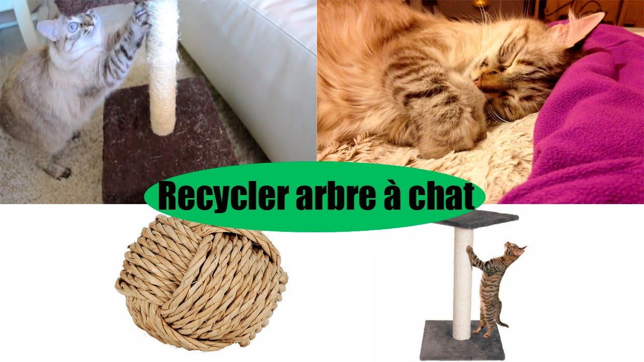diy recycler un arbre chat youtube. Black Bedroom Furniture Sets. Home Design Ideas