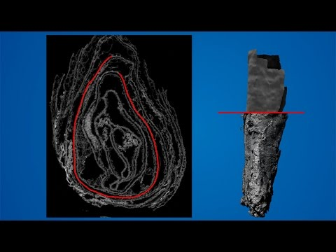 How to open an ancient scroll without touching it | Science News