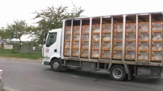 Illégalité du transport des chevreaux chez Loeul & Piriot et Doux