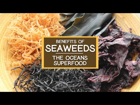 The Nutritional Benefits of Seaweed, The Ocean