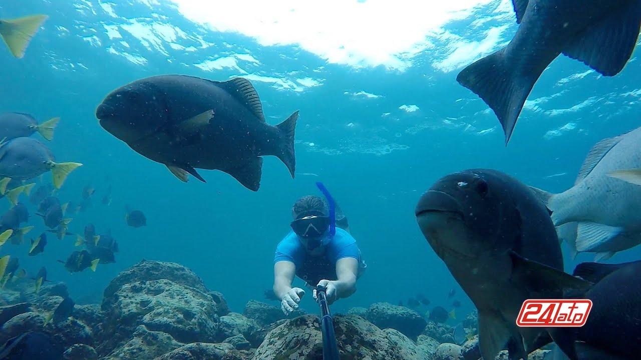 Galapagos Snorkeling Isla Santa Fe Ecuador - Apnea Galápagos Islands GoPro Fish