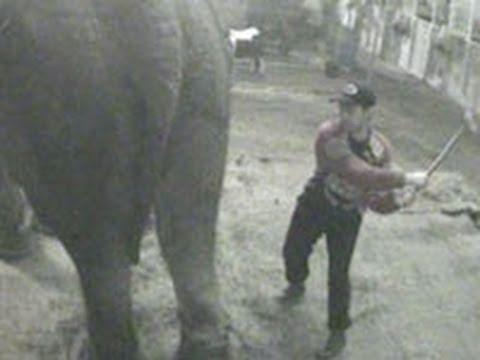 Shocking ADI cruelty exposé shames UK circus industry