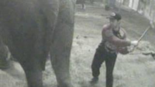 Shocking new ADI cruelty exposé shames UK circus industry