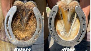 FarrierHoof RestorationSatisfying