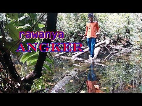 FISHING IN BORNEO FOREST II Mancing  Ke  Hutan Kalimantan