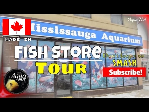 Fish Store Tour of Mississauga Aquariums | UFA Canada Flowerhorn Competition Winner | Cichlid Shop