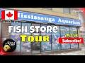 Aquarium Fish Store Tour of Mississauga Aquariums 🐠 Flowerhorn Cichlid Shop