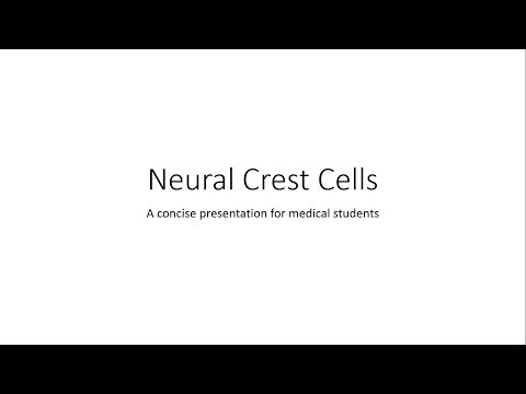 Neural Crest Cells - Embryology