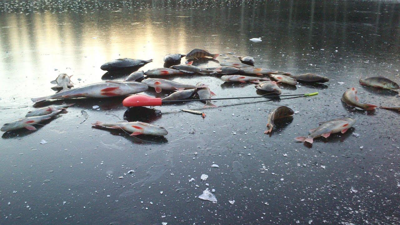 Лов окуня на первом льду