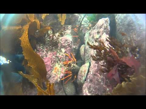 Wellington diving- Island Bay marine reserve