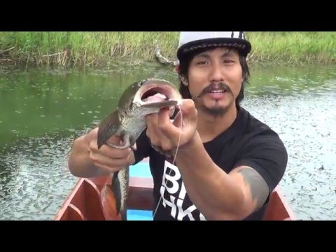 How to fish for snakeheads with the Zeezar Frogs