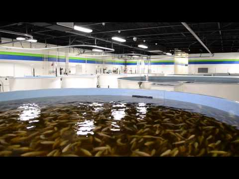Pentair Aquatic Eco-Systems Business Overview