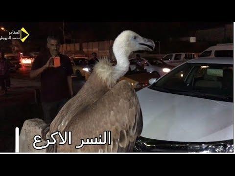 حيوانات لن تراها الا في سوق الغزل بغداد/محمد الدرويش