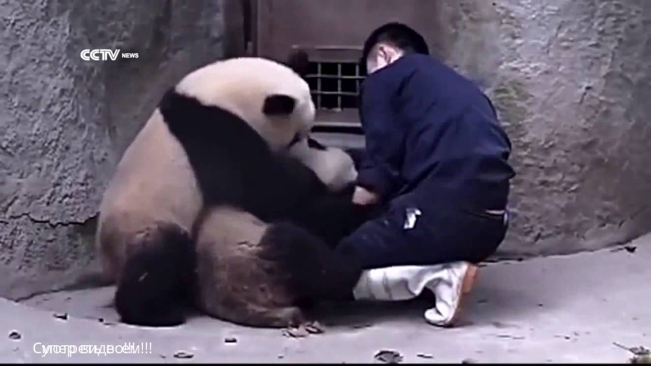 Great fun with pandas! 2016