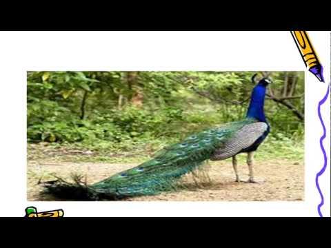 موضوع تعبيرعن الطيور للصف الرابع الابتدائى Youtube