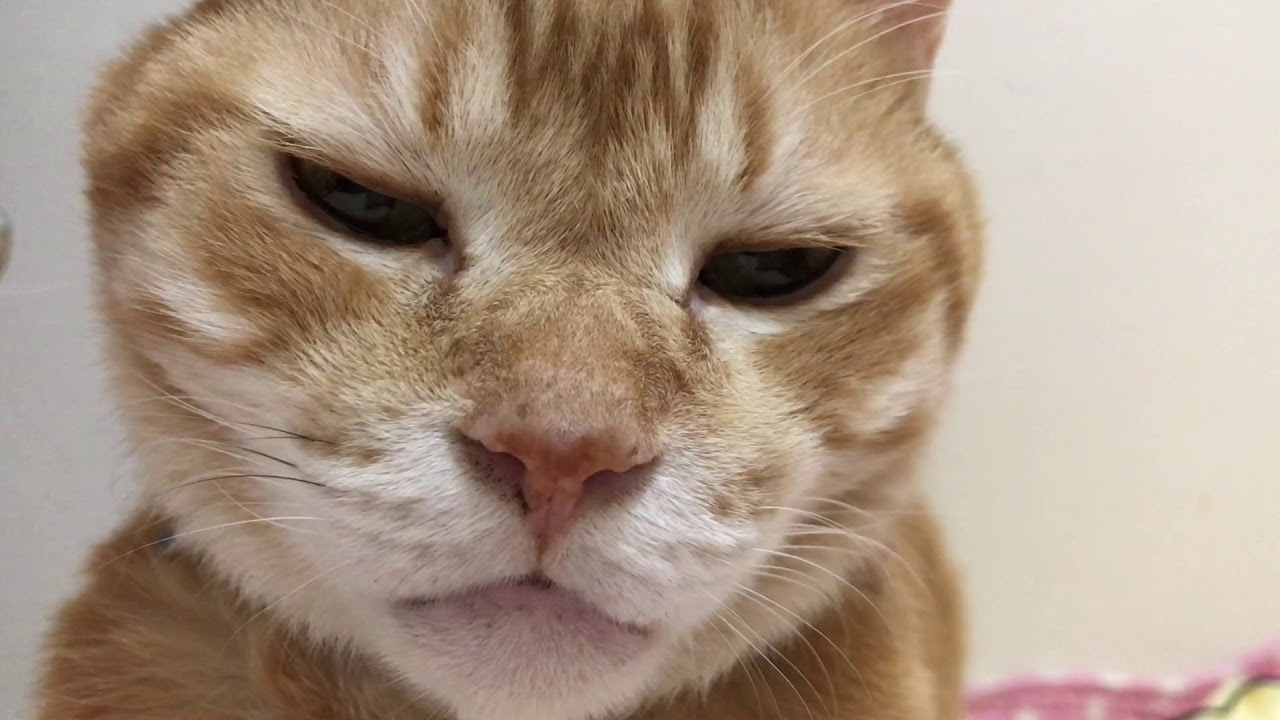 起きたら横にいる猫 - YouTube