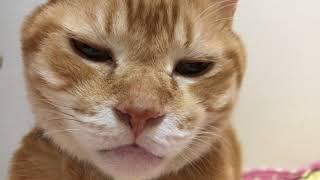 朝一番にチャーボのお顔を見て一日が始まるのは幸せですが、この顔に二...