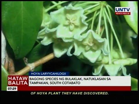 Bagong species ng bulaklak natuklasan sa Tampakan, South Cotabato