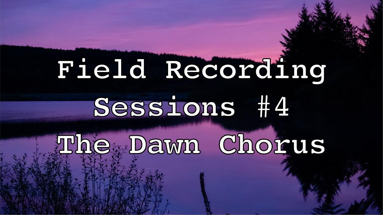 Field Recording Sessions #4 -  Autumn Dawn Chorus
