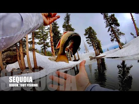 Sequoia National Park Forest Brook Trout Fishing Photos & Fun