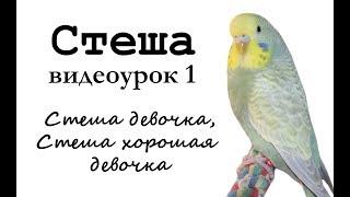 """Учим попугая по имени Стеша говорить, видеоурок 1: """"Стеша девочка, Стеша хорошая девочка"""""""