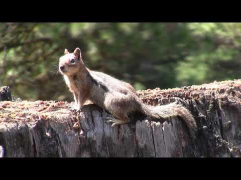 Mammals Animals Squirrels, Rodents, Deer, Elk, Moose, Bones Part 5 of 5 - Western N America Nature