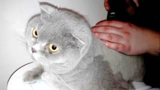 Стрижка котов и кошек. Узоры на шерсти. Выстригание декоративных элементов
