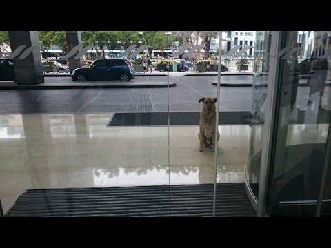 Mirá cómo un perro callejero se ganó el corazón de una azafata alemana
