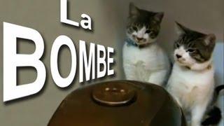 LA BOMBE - PAROLE DE CHAT