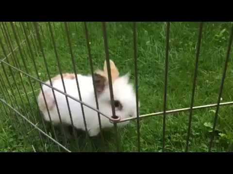 Puk het konijntje maakt een vreugdesprong – Dierenoppas Amersfoort