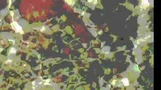 Honored Matres - Liberation - Frigio Records FRV014