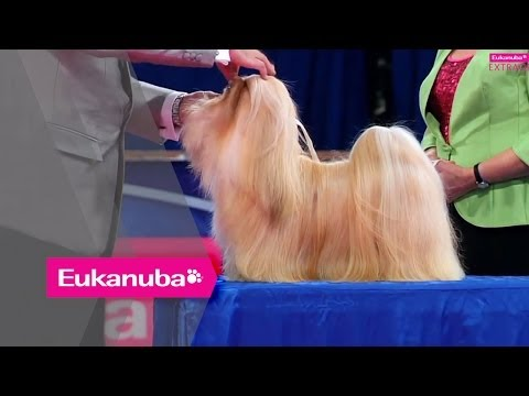 Eukanuba World Challenge- Elizabeth the Lhasa Apso - Part 2