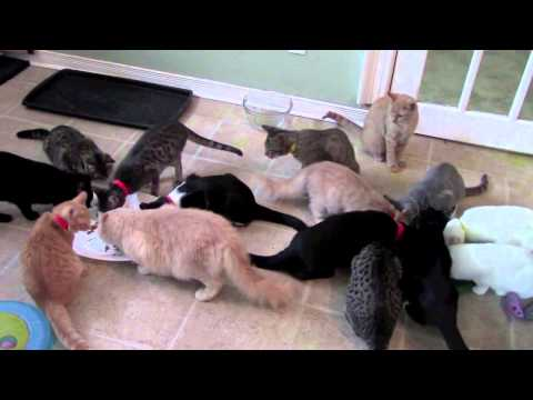 North Toronto Cat Rescue - How to Feed Wet Food to Over 200 Cats