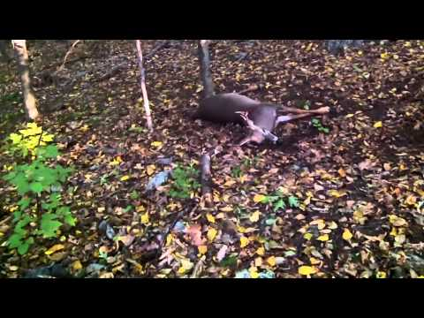 2015 Connecticut Bow Hunting