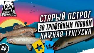 Русская Рыбалка 4 Стрим За трофеями на Нижнюю Тунгуску и Старый Острог