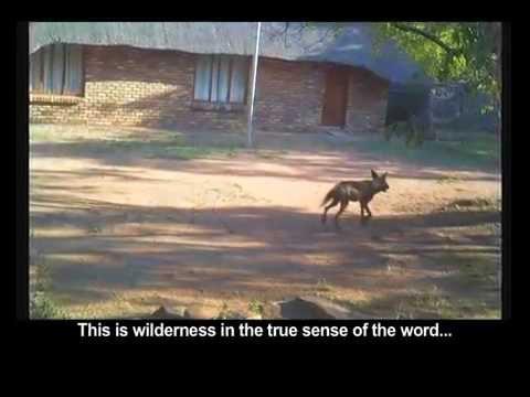 Wild Dogs Waterberg