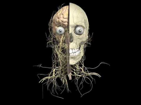 Adult In my nerves