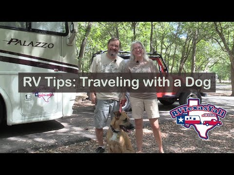 10 Tips For RV Camping With A Dog | RV Texas
