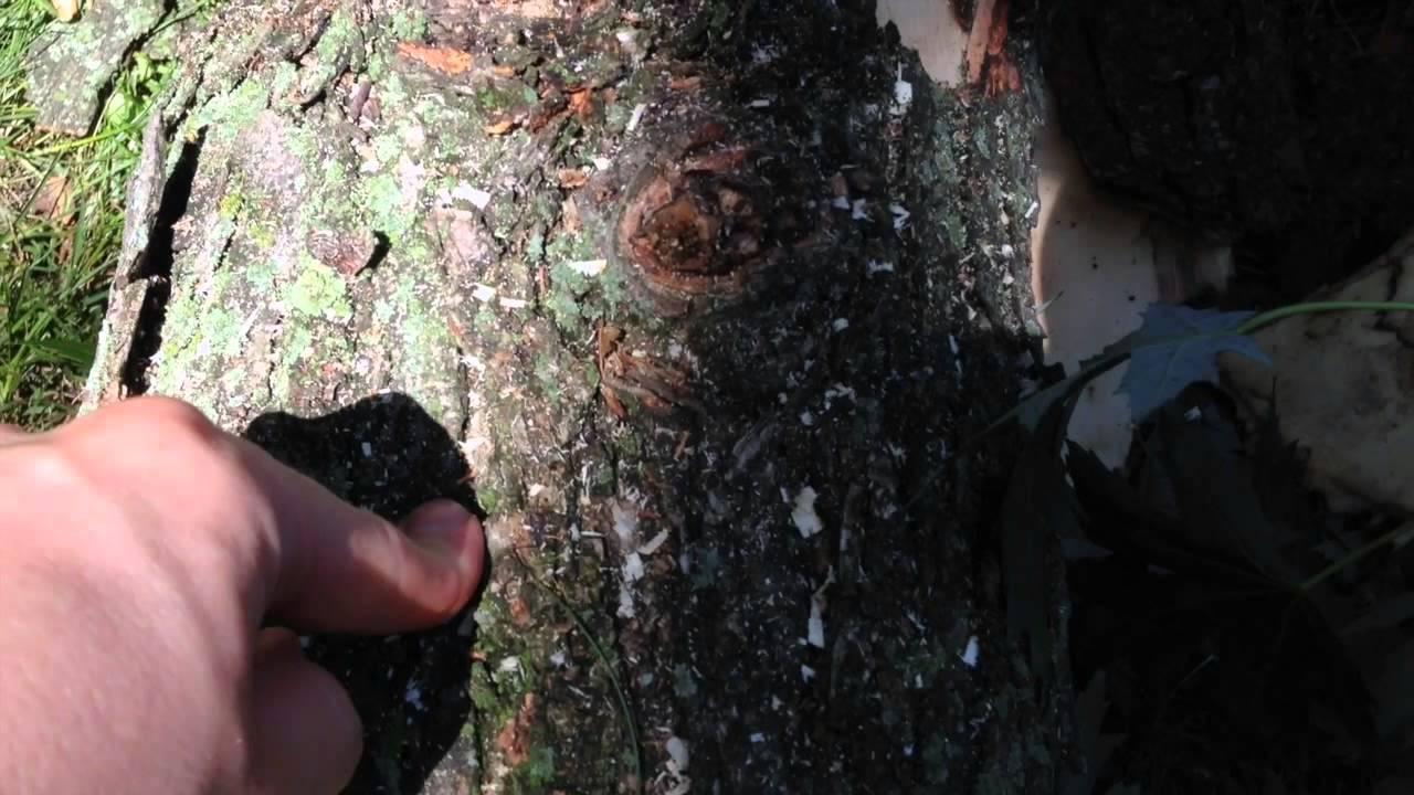 Video Story Problem - Tree Boogers!