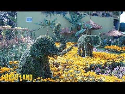 Видео Клумбы в виде животных || PHOTO LAND (клумбы, клумбы на даче, клумбы на даче фото)