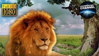 SERENGETI HD | Afryka Serengeti - film przyrodniczy | film dokumentalny z polskim lektorem
