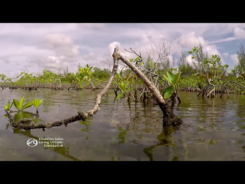 Inside The Mangrove Forest