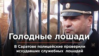 Голодающих лошадей в Саратове навестили полицейские и волонтеры