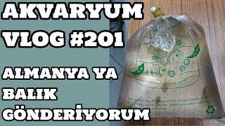 Akvaryum Vlog #201 (Almanya ya Balık Gönderiyorum)