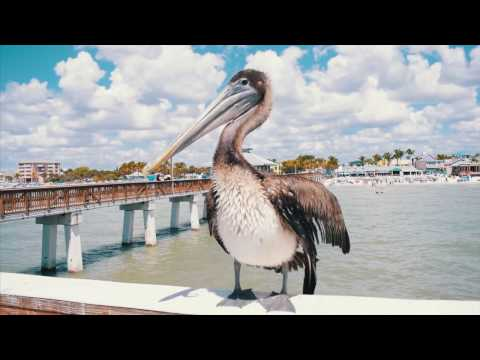 Tourism Marketing - Visit Fort Myers Beach